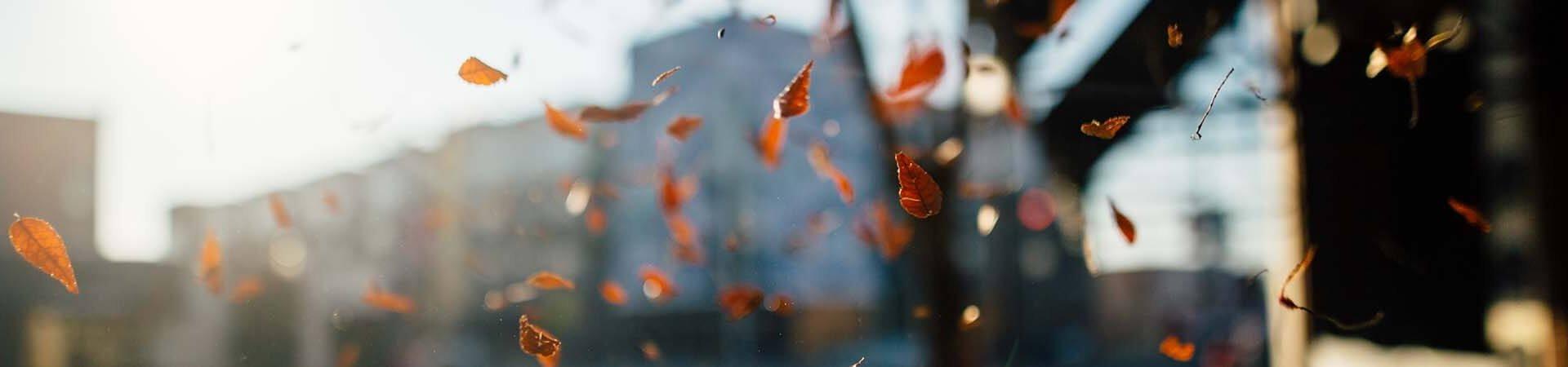 sca-strata-community-living-autumn-2018
